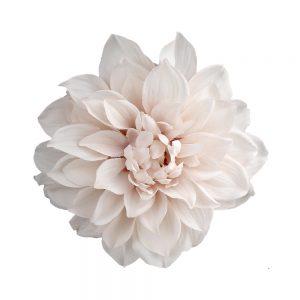 dahlia ines rose bisque