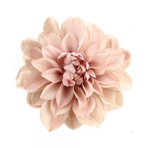 dahlia ines rose nude