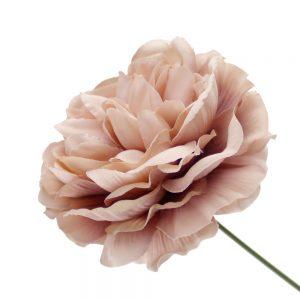 fleur amanda rose nude