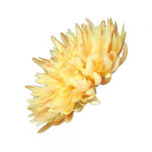 fleur chrysantheme