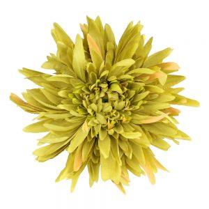 fleur chrysantheme vert clair
