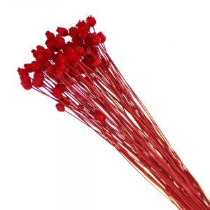 jazilda preservee rouge