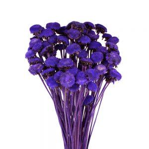 pali pala preservee violet