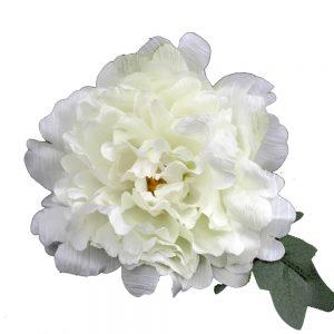 pivoine ada blanc